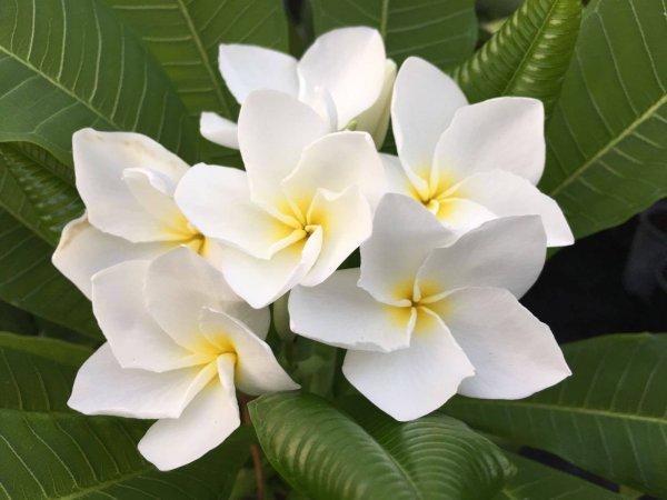 Mostra botanica di piante rare e insolite universit di for Piante rare
